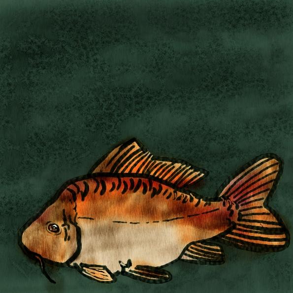 Audiofish