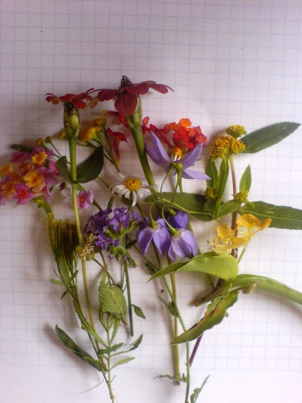 Many different types of flower