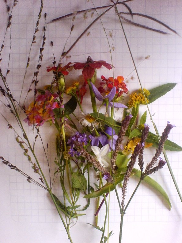 Many different types of flower and grass seeds