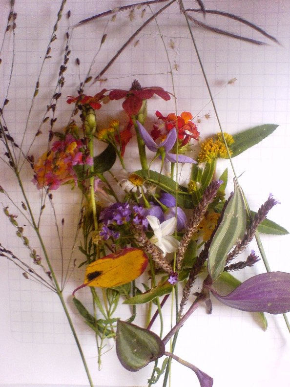 Many different types of flower and grass seeds and leaves