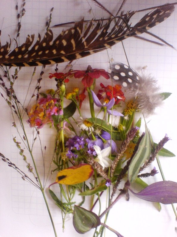 Many different types of flower and grass seeds and leaves and feathers
