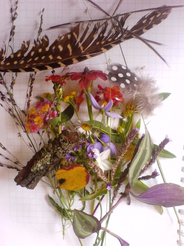 Many different types of flower and grass seeds and leaves and feathers and bark